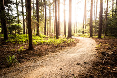 Hiking path and sunset in beautiful woods Stock Photography