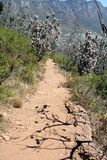 Hiking Path on table Mountain, South Africa Stock Photos