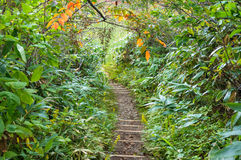 Hiking path, track in forest with green trees Stock Photography