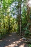Hiking Path trough green Forest of in summer time.  stock photography