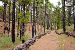Hiking path, Volcanoes route in La Palma island, Royalty Free Stock Image