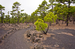 Hiking path, Volcanoes route in La Palma island, Stock Image