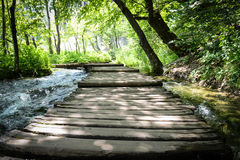 Hiking Path on a Wooden Trail Stock Image