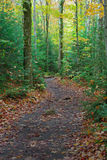 Hiking Path through the Woods. A hiking path winds through a forest.  Autumn leaves have fallen on the dirt trail Royalty Free Stock Photography