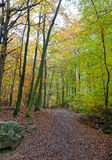 Hiking Path woods autumn, Ardens, Wallonia, Belgium Stock Photography
