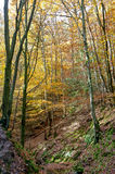 Hiking Path woods autumn, Ardens, Wallonia, Belgium Stock Images