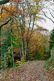 Hiking Path woods autumn, Ardens, Wallonia, Belgium Stock Image