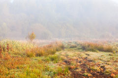 Hiking paths on the moor in fog Stock Photography