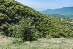 Hiking pathway- journey through roads, mystical nature. Mountain landscape- springtime mystical nature. Journey through roads and stone- hiking pathways stock image