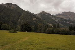 Hiking pathway in a meadow in the Alps in summer stock photo