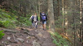 Hiking people. Hiker trio in the mountain. Two woman and man trekkers walking through forest path with backpack.  stock video
