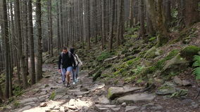 Hiking people. Hiker trio in the mountain. Two woman and man trekkers walking through forest path with backpack.  stock footage