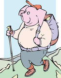 Hiking pig. Happy hiking pig with rucksack Royalty Free Stock Images