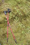 Hiking poles resting on green moss. Two crossed red hiking poles laid down on green spongy moss Stock Photos