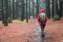 Hiking in rain. Hiker walking on pine forest path on rainy day wearing raincoat Stock Photos