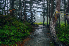 Hiking in the rain forest Royalty Free Stock Photography