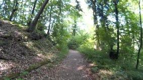 Hiking on the Rheinsteig stock video