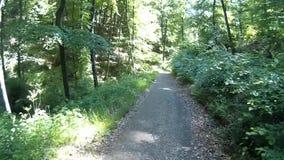 Hiking on the Rheinsteig stock video footage