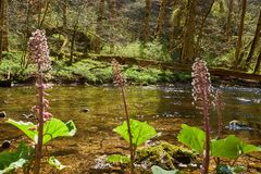 Hiking in the river gauchach canyon in the black forest in germany stock images