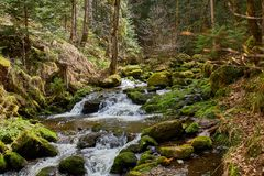 Hiking in the river ravenna canyon in the black forest in germany royalty free stock photos