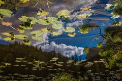 Lily pond in Rocky Mountain National Park. While hiking in Rocky Mountain National Park, I came across a lily pond with reflections of the mountains. I thought Stock Image