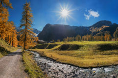 Hiking route through autumnal sertig valley with colorful larch Royalty Free Stock Photography