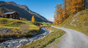 Hiking route through autumnal sertig valley with colorful larch Royalty Free Stock Photos