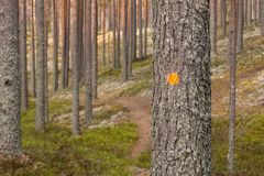 Hiking route markings in a national park. Hiking route markings on pine trees at a Finnish national park Royalty Free Stock Images