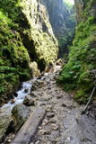 Hiking in the sapte scari canyon from Brasov. Royalty Free Stock Images
