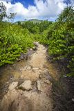Hiking on the seychelles 4 Royalty Free Stock Photo