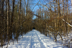 Hiking / skiing trail in winter Stock Photo
