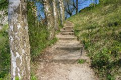 A hiking stairway next to some birch trees. And grass royalty free stock image