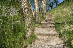A hiking stairway next to some birch trees. And grass stock images