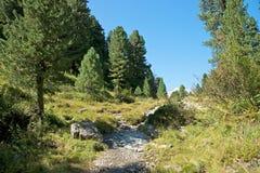 Hiking in the swiss alps. (Maloja Stock Photos