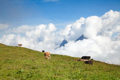 Hiking in swiss alps Royalty Free Stock Photo
