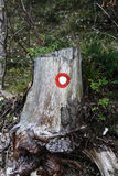 Hiking symbol, marking the correct trail, painted on an old tree Stock Images