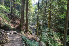 Hiking to the sapte scari canyon from Brasov. Stock Photo