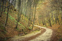 Hiking track in the forest Royalty Free Stock Images