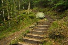 Hiking track Hirschgrundweg 08 Royalty Free Stock Photo