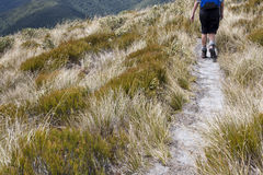 Hiking track, New Zealand. Hiking in the South Island, New Zealand Stock Photos