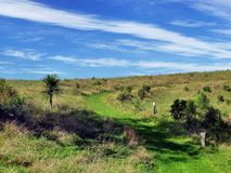 Hiking track trough meadows with bush vegetation. Hiking track leading through the grass and bush vegetation of Motuihe Island near Auckland Royalty Free Stock Images