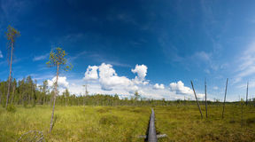 Hiking trail. Panoramic view of hiking trail at Ruunaa hiking area, Finland royalty free stock image