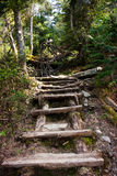 Hiking trail. A hiking trail going up Mount Sutton located in Quebec, Canada royalty free stock photo