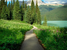 Hiking Trail. Trail Through the Woods in the Canadian Rockies stock image