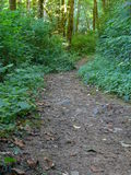 Hiking trail. A hiking trail in the forest stock photos