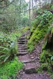 Hiking trail. Stony stairs as a part of hiking trail in Marin County, California royalty free stock photo