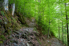 Hiking trail. In fresh spring forest royalty free stock images