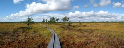 Hiking trail. Wooden hiking trail through bog. Wide panorama image stock photo