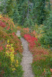Hiking Trail. Through alpine meadow and forest on Hurricane Ridge, Olympic National Park, Washington State Stock Image