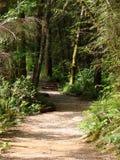 Hiking Trail Royalty Free Stock Photos
